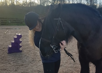 Wings Cumbria's Equine Facilitated Learning...